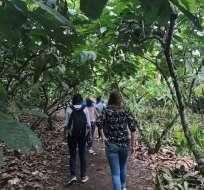 Turistas caminan por Yaussa, Puerto Quito, y conocen sobre el proceso de industrialización del cacao, y sus derivados. Foto: Twitter Ministerio de Turismo.