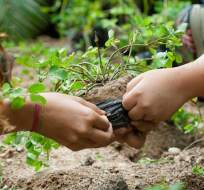 En Ecuador se promueve en los estudiantes la actividad de plantar árboles.