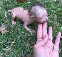 Algunos consideraron que el animal era producto de experimentos en un bosque. Foto: Facebook