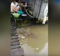 """Durante insólito video, la mujer hasta """"baña"""" al reptil. Foto: Captura"""
