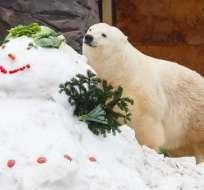 Oso polar Milana del zoológico de Gelsenkirchen