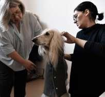Milán ofrece un servicio muy novedoso para perritos italianos. Foto: AFP
