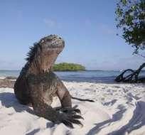 Galápagos es un destino ecoturístico que figura entre los más exclusivos del Pacífico. Foto: Tomado de Telemetro.com.