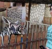 El insólito engaño de un zoológico en Egipto.