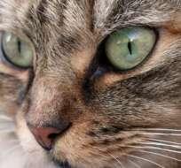 Por qué un pueblo en Nueva Zelanda quiere prohibir los gatos.
