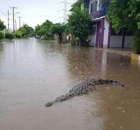 Pánico en Querétaro por los animales que tenían 3 metros de largos. Foto: que.es
