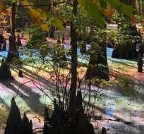 No, no es un efecto de Photoshop. Esta foto fue tomada en pantano en un parque First Landing State, en Virginia. ALLISON GOZ