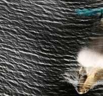El gobierno japonés dijo que la caza comercial de ballenas se limitará a sus aguas territoriales y zona económica exclusiva.