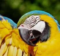 El video del ave grabado en Canadá se volvió viral. Foto referencial / pixabay.com