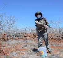 El plan de desratización se cumple desde hace varios días en la isla Seymour Norte. Foto: Parque Galápagos