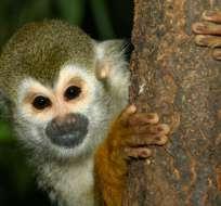 Ministerio presentó informe parcial de las listas rojas de especies amenazadas de flora y fauna del Ecuador. Foto referencial