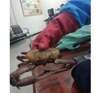 La ciudadana, que viajaba hacia Nueva York, no tenía los permisos para llevar los crustáceos. Foto: Twitter @Ambientebogota