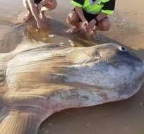 Unos pescadores encontraron un pez luna gigante en una playa del sur de Australia. JACOB JONES