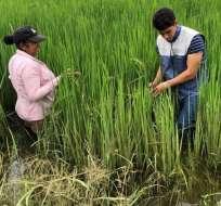 Las provincias de Los Ríos Manabí y Guayas son las más afectadas. Foto: Ministerio de Agricultura