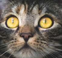 Según grupo de monitoreo, con esa práctica se sacrificó más de 3.000 animales. Foto: pixabay.com