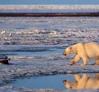 """La naturaleza ya está en parte """"perdida"""", según expertos. Foto: AP - Archivo"""