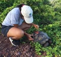 Guardaparques trasladaron a la tortuga a la clínica del Parque Galápagos.  Foto: Parque Nacional Galápagos