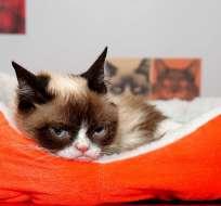 Grumpy Cat murió a los 7 años. Foto: AFP