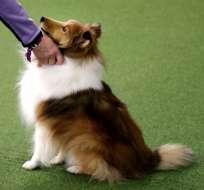 Hay muchos factores que pueden incidir en el nivel de estrés de una persona o de un can, dijo la experta. Foto: AP