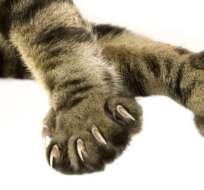 Nueva York impulsó la prohibición de la amputación de las garras de los gatos. Foto: Getty Images