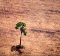 El ambicioso estudio detalla qué plantas se han extinguido, dónde y qué tan rápido.
