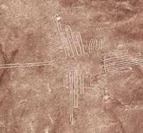 """Este dibujo había sido clasificado genéricamente como """"colibrí""""."""