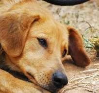 Los animales comieron el alimento donado a estos establecimientos. Foto: Pixabay