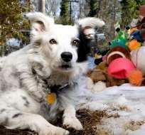 El can podía identificar más de 1.000 objetos. Foto: Facebook Chaser