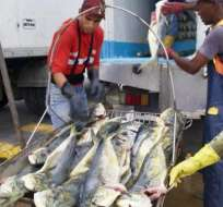 6 ecuatorianos detenidos en Colombia con pesca ilegal.