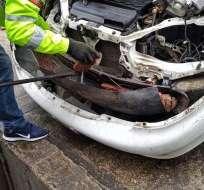 CARCHI.- La droga estaba oculta en el parachoques del vehículo. Foto: Fiscalía