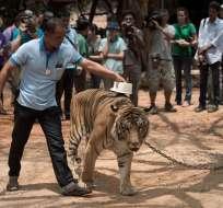 KANCHANABURI, Tailandia.- Otros 61 mamíferos aún continúan con vida. Foto: AFP