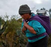 Los indígenas representan el 25% de la población de 17,3 millones. Foto: AFP
