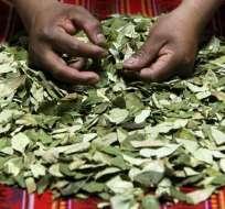 Evo Morales pide en la ONU despenalizar la coca en Bolivia