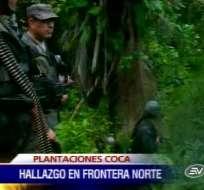 Ejército halla un vivero con más de 12 mil plantas de coca en Carchi