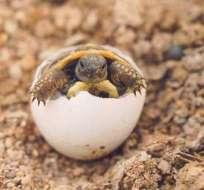Miles de huevos de tortuga fueron aplastados por maquinaria pesada en el Caribe