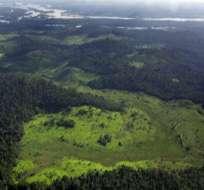 La deforestación del Amazonas está en sus niveles más bajos