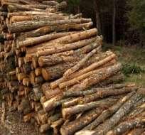 China es el mayor comprador de madera ilegal del mundo, según ONG