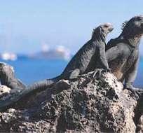 Alemán fue declarado culpable de tratar de sacar iguanas de Galápagos