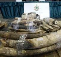 Apetito chino por el marfil está acabando con los elefantes