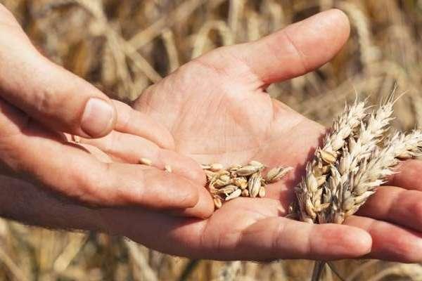 Se advierte posible desabastecimiento de harina en Ecuador