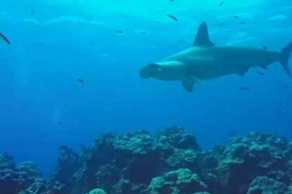 Piden ampliación del área de reserva marina de Galápagos