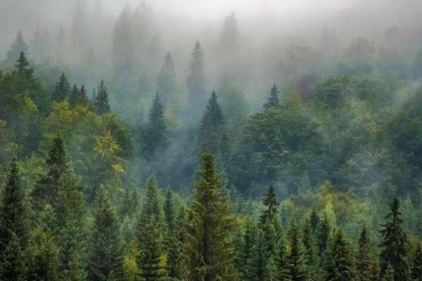 El deterioro de la naturaleza pone en riesgo la vida humana