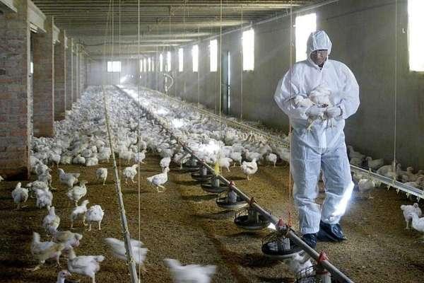 OMS pide precaución ante casos de gripe aviar detectados en Rusia