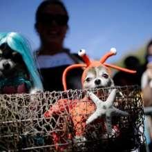 27mo desfile anual de perros de Tompkins Square Halloween en Nueva York / Fotos: AFP