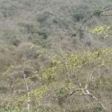 Es uno de los últimos remanentes de bosque seco de la costa ecuatoriana.