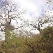 Guayaquil y la riqueza de sus bosques. Foto: Archivo - Referencial