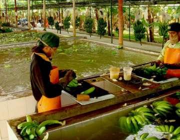 Ecuador sostiene que no existe una justificación fitosanitaria que justifique el bloqueo. Foto: Pro EcuadorFoto: Archivo