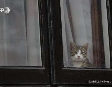 Assange adoptó al tierno felino en mayo de 2016. Foto: AFP