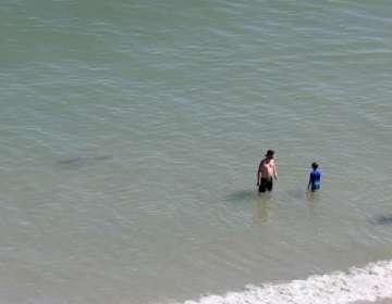 Tres tiburones nadaban cerca de una familia. Foto: FB