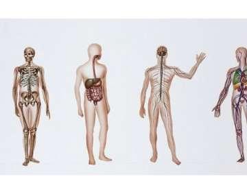 ¿Qué sucede cuando un cuerpo es donado a la ciencia médica?